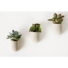 Magnetiske Planter 3-pak