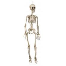 Hængende Skelet 90 Cm