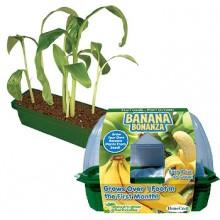 Dyrk dine egne bananer