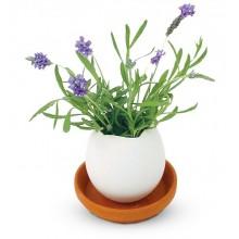 Eggling Lavendel