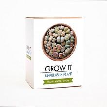 Odla Din Egen Odödliga Växt