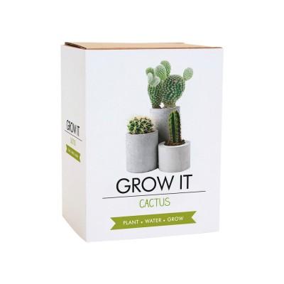 Odla din Egen Kaktus